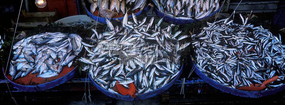 "Europe/Turquie/Istanbul : Marché autour du bazar aux épices ""Misir Carsisi"" - Poissonnier //  Europe / Turkey / Istanbul: Market around the spice bazaar ""Misir Carsisi"" - Fishmonger"