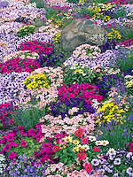 Mixed flowers in landscaping at Al's Nursery, Oregon