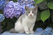 Carl, ANIMALS, photos(SWLA2218,#A#) Katzen, gatos