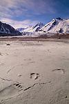 Bear tracks on the banks of the Tatshenshini River, Yukon, Canada.