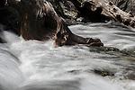 Tumbling water over roots in high-mountain stream. Nordtirol, Tirol, Austrian Alps, Austria, 2300 metres, July.