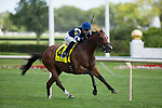 ARLINGTON HEIGHTS,IL-AUGUST 12: Oscar Performance,ridden by Jose Ortiz,wins the Secretariat Stakes at Arlington International Race Track on August 12,2016 in Arlington Heights,Illinois (Photo by Kaz Ishida/Eclipse Sportswire/Getty Images)