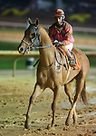 Loranger Native, with John Velasquez up, after winning the Blue and Gold Stakes at Charles Town Races and Slots in Charles Town, West Virginia on April 17, 2011
