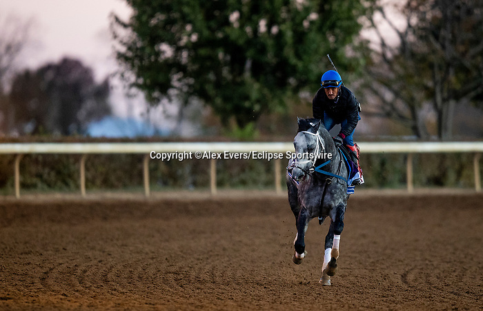 November 4, 2020:  Knicks Go, trained by trainer Brad Cox, exercises in preparation for the Breeders' Cup Dirt Mile at Keeneland Racetrack in Lexington, Kentucky on November 4, 2020. Alex Evers/Eclipse Sportswire/Breeders Cup