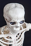 Head shot of skeleton