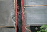 A Morgan City, Louisiana watches as Hurricane Gustav makes landfall September 1, 2008.    (Mark Wallheiser/TallahasseeStock.com)