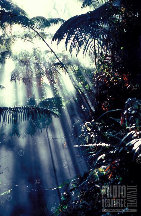 Steam venting in Hapu'u tree ferns, HI volcanoes Natl. Park