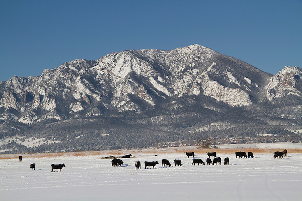 Fresh snow along the Front Range, Boulder, Colorado, .  John leads private photo tours in Boulder and throughout Colorado. Year-round Boulder photo tours.