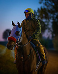 November 2, 2020: Wildman Jack at Keeneland Racetrack in Lexington, Kentucky on November 2, 2020. Alex Evers/Eclipse Sportswire/Breeders Cup