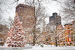 Fresh snow on the official Boston Christmas tree in Boston Common, Boston, MA, USA
