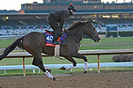 """November 5, 2020: Civil Union, trained by trainer Claude """"Shug"""" McGaughey, exercises in preparation for the Breeders' Cup Filly and Mare Turf at Keeneland Racetrack in Lexington, Kentucky on November 5, 2020. Jessica Morgan/Eclipse Sportswire/Breeders Cup"""