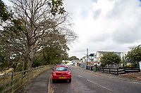 BNPS.co.uk (01202) 558833. <br /> Pic: CorinMesser/BNPS<br /> <br /> Pictured: Homes and trees at Whitecliff Road in Poole, Dorset. <br /> <br /> Police have launched an investigation into allegations a wealthy homeowner has killed two 'magnificent' oak trees because they blocked their sea views.<br /> <br /> The 70ft tall mature specimens have had holes drilled into their trunks and poison poured inside in a 'disgraceful' act of sabotage. <br /> <br /> The two trees stand on the edge of a recreation ground between Poole Harbour, Dorset, and a cluster of luxury homes that sell for between £2m to £3m.