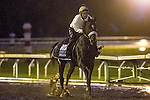 October 28, 2015: Highland Sky, trained by Barclay Tagg and owned by Joyce Young & Gerald McManis, exercises in preparation for the Breeders' Cup Juvenile Turf at Keeneland Race Track in Lexington, Kentucky on October 28, 2015. Jon Durr/ESW/CSM