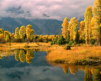 Fall color along the Snake River; Grand Teton National Park, WY