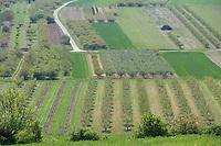 Europe/France/Bourgogne/89/Yonne/Jussy: vergers de l'auxerrois