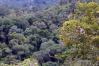 Plano de manejo florestal em área conhecida como Bituba, explorado pelo grupo Orsa.<br />Almeirim, Pará, Brasil.<br />Foto Paulo Santos/Interfoto<br />03/2005.