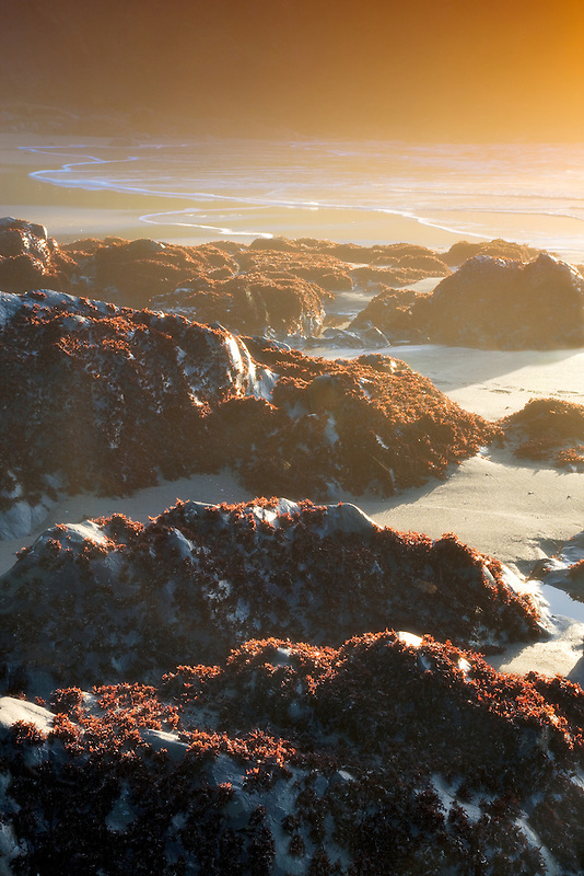 Low tide and rocks with sunset. Samuel H. Boardman State Scenic Corridor. Oregon