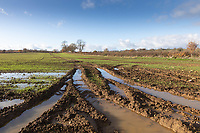 19.11.2020 Ruts with standing water in them due to heavy rainfall<br /> ©Tim Scrivener Photographer 07850 303986<br />      ....Covering Agriculture In The UK....