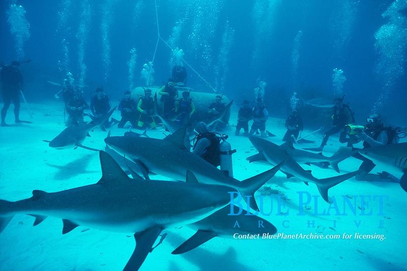 shark diving - a group of divers, shark diving tour, watch shark handler feeds, Carcharhinus perezii, Bahamas, Caribbean, Atlantic