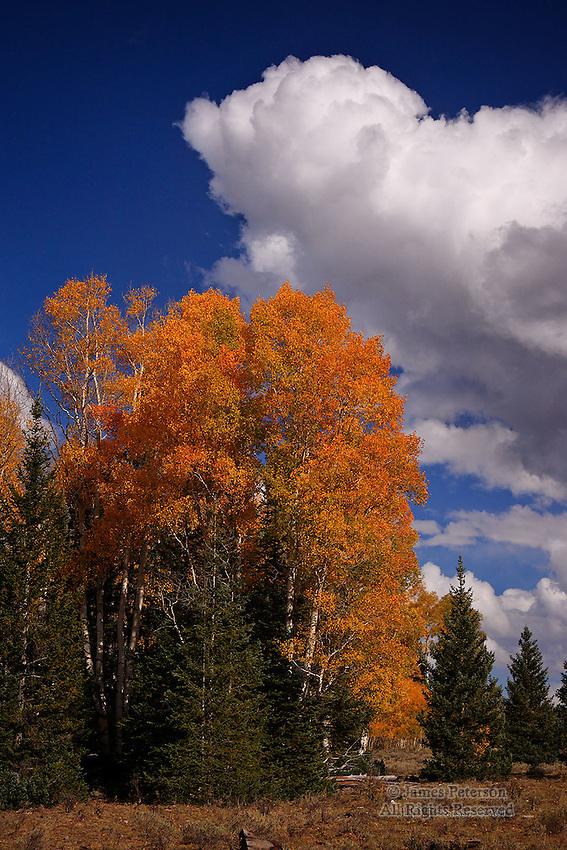 The Arrival of Autumn, Aquarius Plateau, Utah