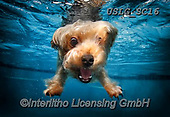 REALISTIC ANIMALS, REALISTISCHE TIERE, ANIMALES REALISTICOS, dogs, paintings+++++SethC_BRADY_WATER_MG_0503book,USLGSC16,#A#, EVERYDAY ,underwater dogs,photos,fotos ,Seth