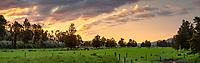 Sunset over farm near Whataroa, South Westland, New Zealand, NZ