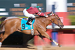 21 February 2009: Kinetic Motion with jockey Martin Escobar wins the 7th race at Oaklawn in Hot Springs, Arkansas