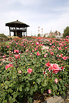 ROSE BUSHES AND OBSERVATION TOWER AT MARY BALEN ZANINOVICH MEMORIAL GARDEN AT MCFARLAND CA USA