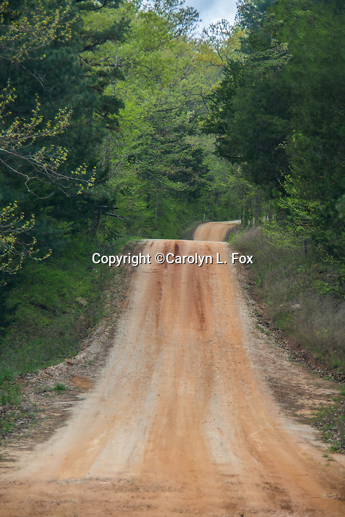 An old dirt road leads to an unknown destination.