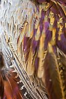 Europe/France/Centre/41/Loir-et-Cher/Sologne/Lamotte-Beuvron:  Détail faisan chez Jean-Louis Chesneau, boucher charcutier, un des rares commerçants de Sologne proposant du gibier aux particuliers. // Europe/France/Centre/41/Loir-et-Cher/Sologne/Lamotte-Beuvron:  <br /> pheasant with Jean-Louis Chesneau, butcher, one of the few merchants offering game Sologne individuals