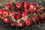 Italy, Alto Adige-Trentino (South Tyrol), village Montagna: Red Delicious apples - decoration | Italien, Suedtirol (Alto Adige-Trentino), Montan: Red Delicious Aepfel - Dekoration