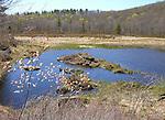 Marsh in Springtime New Hampshire