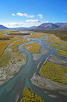 An aerial view of the green waters of the braided upper Sheenjek River, which flows south from Alaska's Brooks Range in the Arctic National Wildlife Refuge, reveals a few patches of spruce trees, but is mostly tundra, glowing with fall colors in late August.