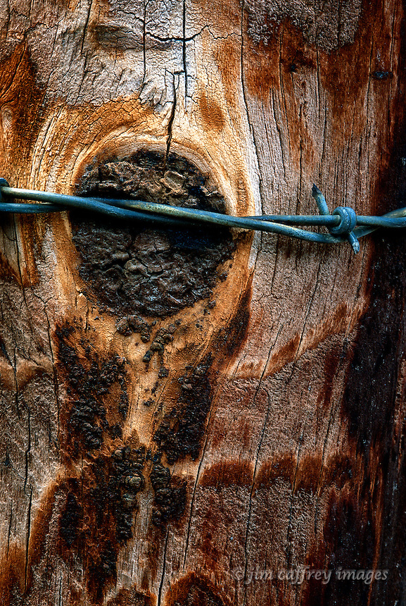 A close-up of a fence post with a strand of barbed wire wrapped tightly around it.
