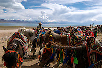 "Nomads near Namtso Lake with their horses.Namtso Lake :Namtso, another holy lake in Tibet, is located near Damxung. 4718 meters (15475 feet) above sea level and covering 1900 square kilometers (735 square miles), the lake is the highest saltwater lake in the world and the second largest saltwater lake in China. The snow capped Mt. Nyainqentanglha, considered as the son of Namtso and leader of sacred mountains, soars up to sky beside her. Singing streams converge into the clean sapphire blue lake, which looks like a huge mirror framed and dotted with flowers..The Namtso Lake is held as ""the heavenly lake"" or ""the holy lake"" in northern Tibet. .Respected as one of the three holiest lakes in Tibet, the Namtso Lake is the seat of Paramasukha Chakrasamvara for Buddhist pilgrims. In the fifth and sixth month of the Tibetan calendar each year, many Buddhists come to the lake pay homage and pray. Deep tracks are worn into the lakeshore due to this activity. In history, monasteries stood like trees in a forest around the site, attracting large numbers of pilgrims as eminent monks in Buddhist temples extended Buddhist teachings...Buddhists believe Buddhas, Bodhisattvas and Vajras will assemble to hold religious meeting at Namtso in the year of sheep on Tibetan calendar. It is said that walking around the lake at the right moment is 100,000 times more efficacious than that in normal years. That's why thousands of pilgrims from every corner of the world come to pray at the site, with the activity reaching a climax on Tibetan April 15...Walking around the lake takes a week. Ritual walkers love to burn aromatic plants to raise smoke on Auspicious Island [explain this a little] and throw a piece of hada scarf into the lake as a token of fulfilled wishes. If the scarf sinks, it implies ones wish is accepted by the Buddha; if the scarf flows on the water or only half sinks, it means one has failed to be honest and something unhappy may lie ahead...On the four sides of the lake stand"