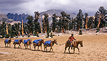 Cowboy Frank Smith, leading pack mules in the high Sierra, Sequoia National Park, California