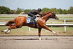 #134Fasig-Tipton Florida Sale,Under Tack Show. Palm Meadows Florida 03-23-2012 Arron Haggart/Eclipse Sportswire.