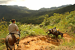 Traveler on a mule, and a mule hauling luggage, negotiate a narrow mountain trail in Pico Bonito National Park, Honduras.