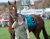 Heather Gregorek leads The Price of Love around the paddock before the Grand National.