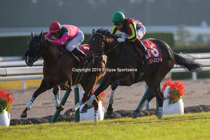 KYOTO,JAPAN-NOVEMBER 12: Jeune Ecole #6,ridden by Yuichi Fukunaga,wins the Daily Hai Nisai Stakes at Kyoto Racecourse on November 12,2016 in Kyoto,Kyoto,Japan (Photo by Kaz Ishida/Eclipse Sportswire/Getty Images)