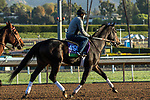 ARCADIA, CA  OCTOBER 30:  Breeders' Cup Mile entrant Bolo, trained by Carla Gaines,   exercises in preparation for the Breeders' Cup World Championships at Santa Anita Park in Arcadia, California on October 30, 2019. (Photo by Casey Phillips/Eclipse Sportswire/CSM)