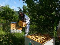 Inspection of the smaller Warré type of hives is much easier.<br /> L'inspection des ruches de type warré de plus petite taille est plus facile.