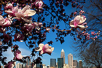 Spring flowers bloom near downtown Charlotte, NC, in early 2010.