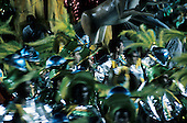 Rio de Janeiro, Brazil. Carnival samba school dancers wearing green yellow in movement.