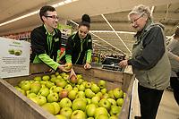 Colleagues Ross Barnes and Sharna Umar help Audrey Warwick pick a Bramley Apple