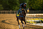 MAY13, 2021: A horse gallops at Pimlico Race Course in Baltimore, Maryland on May 13, 2021. EversEclipse Sportswire/CSM