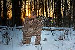 Crossbow hunter taking aim