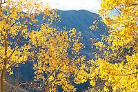 Aspen and mountains near Crystal, Colorado