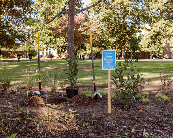 October 26, 2017. Raleigh, North Carolina.<br /> <br /> A new garden designed by Ben Skelton containing native Plants For Birds was dedicated at the North Carolina Executive Mansion.