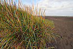 High grass near ocean, long beach wa.